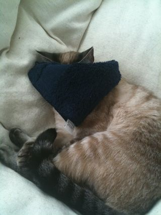 cat wearing eye mask